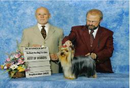 Adanta Yorkshire Terriers